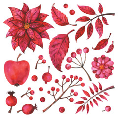 Winter and fall watercolor floral elements set.  Hand painted red branches, fruit, flower, plants and berries isolated on white background. Botanical clip art