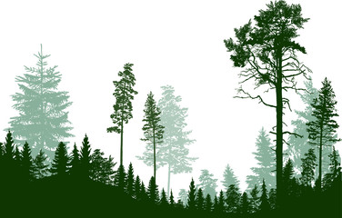 fir and pine trees green forest isolated on white