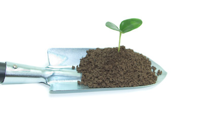 plant on Garden trowel ,on white background