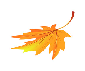 Autumn Golden Yellow Leaf Vector Illustration