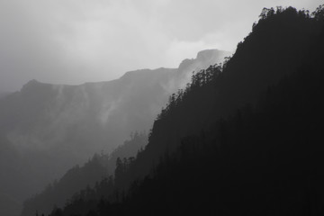 Grayscale Dark and Light Landscape Silhouette of Misty Mountains covered in Spruce Pine Coniferous Trees Shrouded in Clouds. Taken in Paro, Bhutan near Tiger's Nest Monastery.