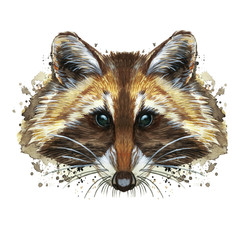 watercolor picture of an animal of the genus of predatory mammals of the raccoon family, raccoon raccoon, raccoon, raccoon portrait, raccoon head, fluffy wool, winter skin, white background for decora