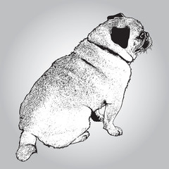 Dog pug sitting. Black and white picture of cute pet. Vector illustration in engraving style.