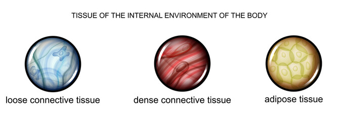 tissue of the internal environment of the body