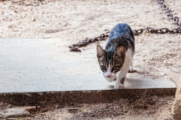 Kitten is playing in the yard