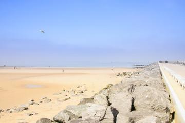 Oostende, Ostende, Belgien, Seagull