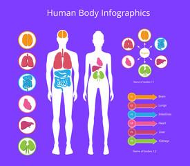Human Body Infographic on Vector Illustration