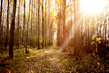 autumn forest landscape with low sun illuminating small trees