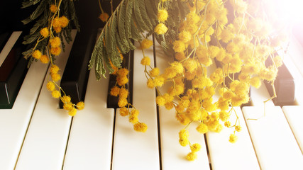 A twig of mimosa on the piano. Spring music. Black and white keys