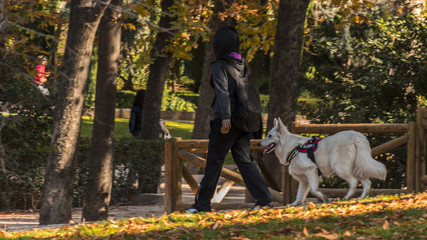 Walking the dog in the Retiro park in the city of Madrid