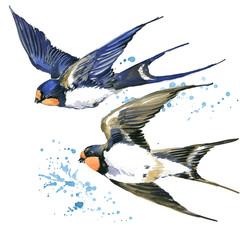 Swallow watercolor illustration.  Bird Swift.