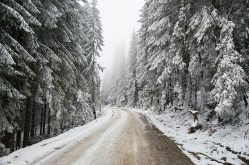 Abandoned mountain road in pine forest, snow strom