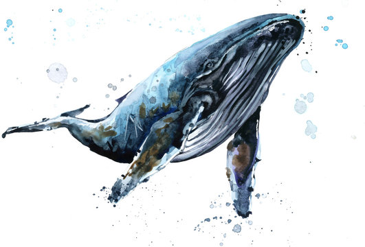 Whale. Humpback whale watercolor illustration. Underwater fauna