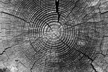 Poster de jardin Texture de bois de chauffage Old tree rings with cracks black and white close-up - macro