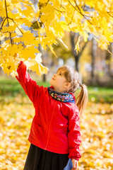 Blonde girl pull a branch of maple. Autumn.