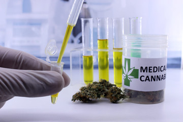 Testing cannabis buds for the extraction of medicinal oil