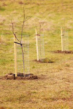 New tree planting, forest renewal, environmental protection.
