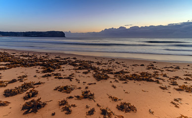 Dawn Seascape and Seaweed on the Beach