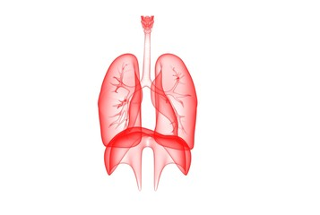 3D Illustration of lungs and diaphragm