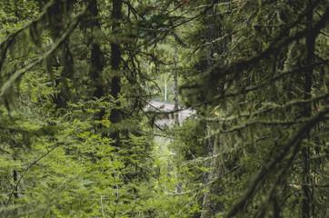 Gloomy dense forest in Siberia