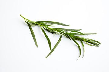 Estragon  (Artemisia dracunculus); ein Zweig Estragon auf weißem Hintergrund