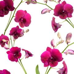 Beautiful purple orchid flower frame isolated on white background