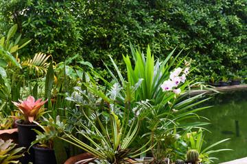 Beautiful green garden landscape in tropical rain season
