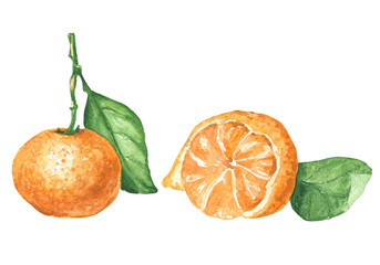 Hand drawn watercolor tangerines with green leaves, food art isolated on white background.
