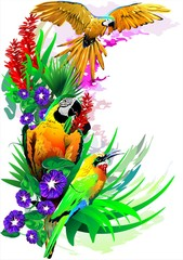 Colorful illustration with tropical birds in colors on an abstract background.
