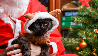 Picture of black cat in deer suit at Santa's arms