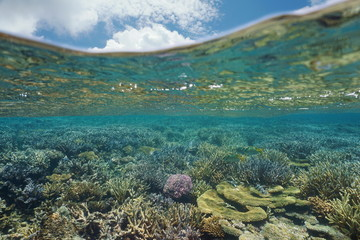 Underwater coral reef in good health and blue sky with cloud above water surface, lagoon of Grande Terre island, New Caledonia, south Pacific ocean, Oceania