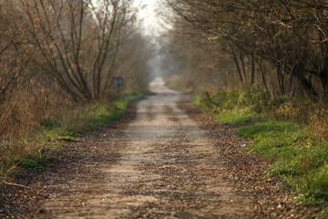 Просёлочная дорога осенью