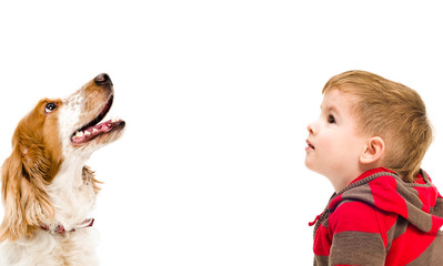 Portrait of Russian Spaniel dog and cute boy, looking up, isolated on white background