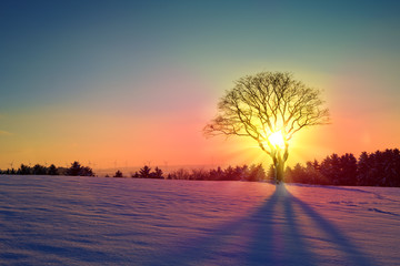 Winter sunset landscape with tree and snow field.
