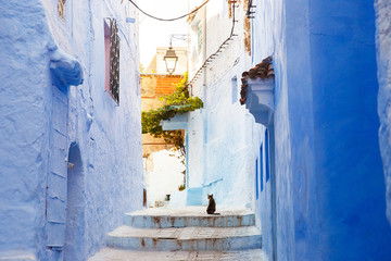 Lonely cat sits on the blue street somewhere in Morocco