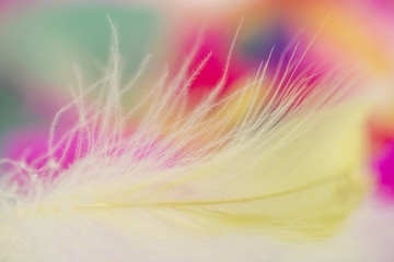 Colorful feathers for background