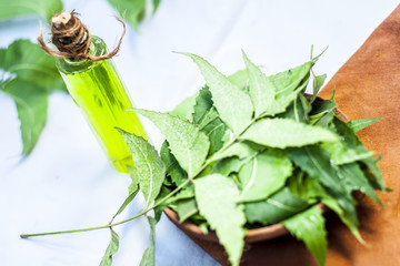Azadirachta indica,Neem with its leaves and oil in a bottle  in a clay bowl for skin care.