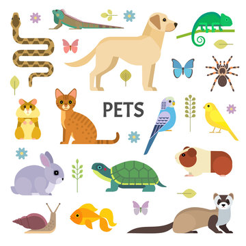 Vector colorful collection of domestic mammals, rodents, insects, birds, reptiles, including dog, cat, rabbit, tortoise, ferret, parrot, snake, guinea pig, chameleon, hamster, tarantula and a canary.