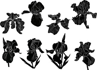 eight black iris isolated sketches