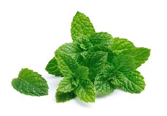 Mint leaf closeup.