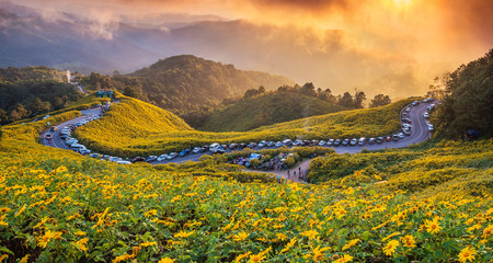 The landscape sunset twilight of beautiful Mexican sunflower in Tung Bua Tong  in Maehongson (Mae Hong Son) Province, Thailand.