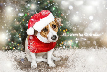 A small dog dressed in Santa Claus suit sitting near Christmas tree under falling snow and looking into camera. Merry Christmas and Happy New Year card. All I wish is Love