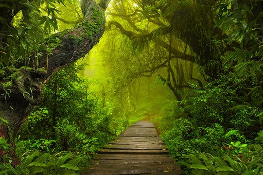 Asian rainforest jungle