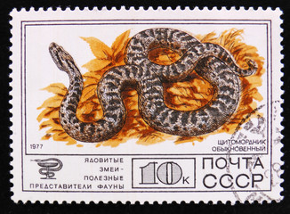 MOSCOW, RUSSIA - APRIL 2, 2017: A post stamp printed in Soviet Union shows Siberian pit viper, or Halys viper, Poisonous snakes series, circa 1977