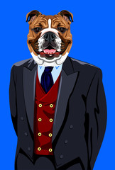 Portrait of English bulldog in the men's business suit