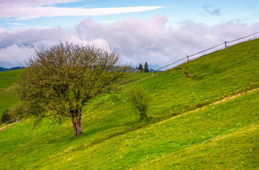 tree and a fence on a grassy hill. lovely springtime scenery in Carpathian mountains with cloud on a blue sky