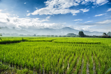 beauty mountain view with green rice plantation
