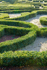 Trimmed boxwood in a french formal garden.