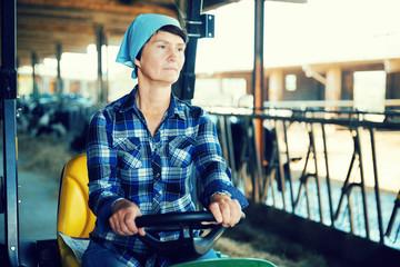 Adult female farmer is sitting in the car near cows