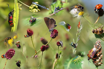 Makro Insekten Collection Wallpaper